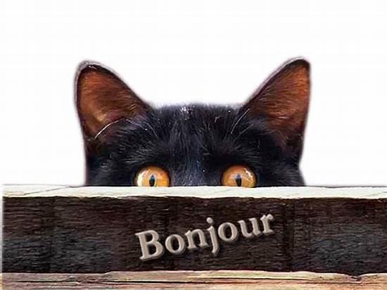 Bonjour-images-chat drôle