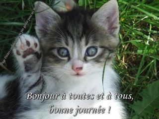 images bonjour with cute cats