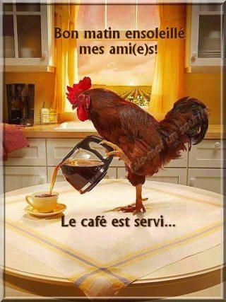 Bonjour Drole Images Et Phrases Topbonjour Com