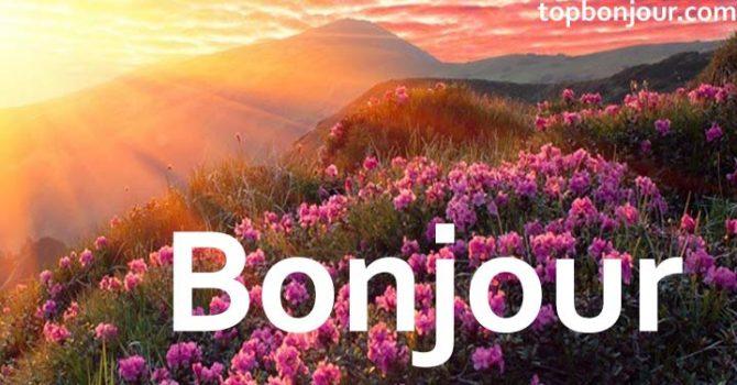 Bonjour fleurs colorées