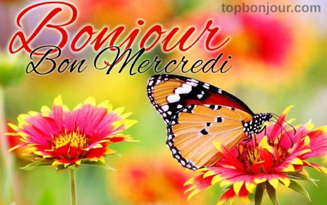 Bon mercredi fleurs