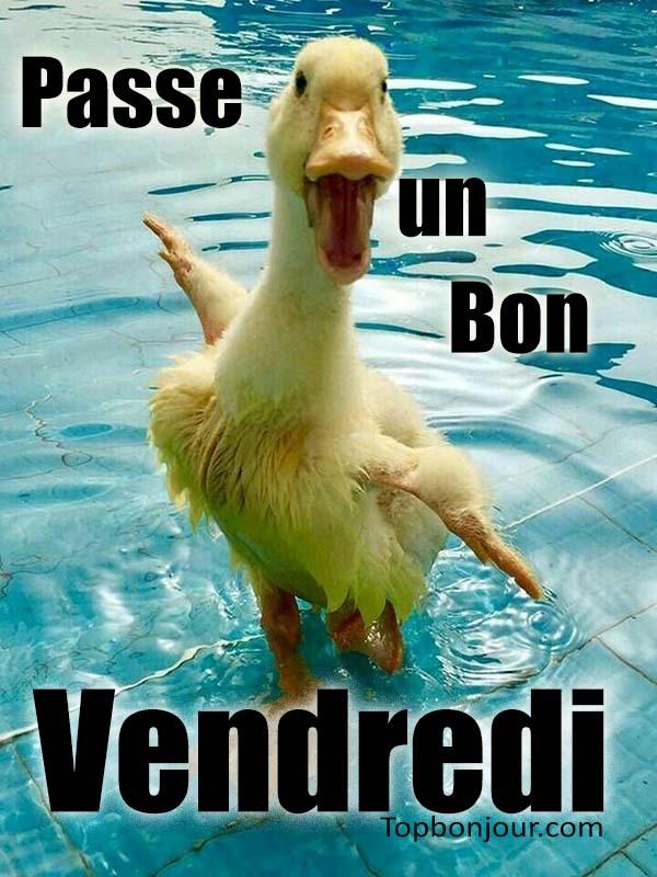 images drôles avec des animaux du week-end